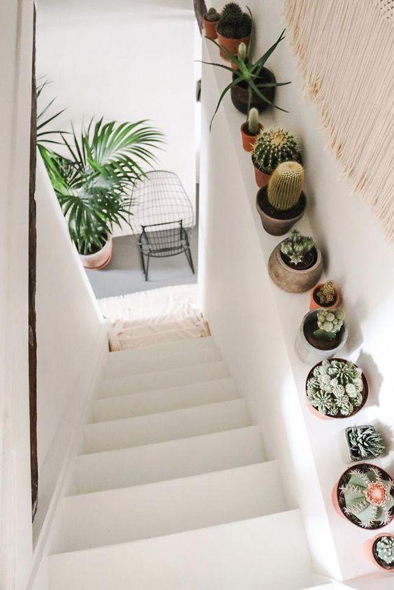 escada com cactos