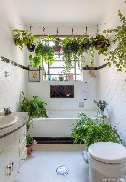 banheiro com plantas suspensas, samambáia