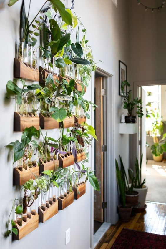plantas, jadrim suspenso, urban jungle
