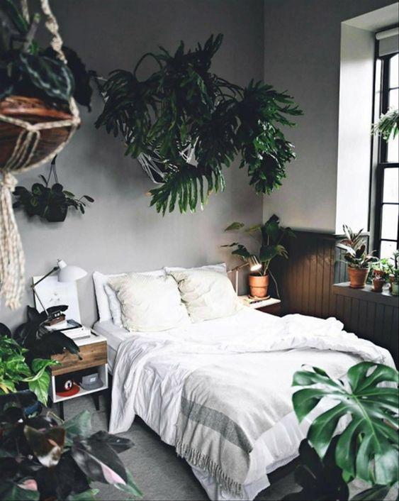 quarto com plantas, costela de adão