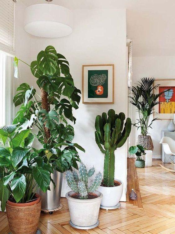 plantas, cactus, costela de adão, lírio da pás